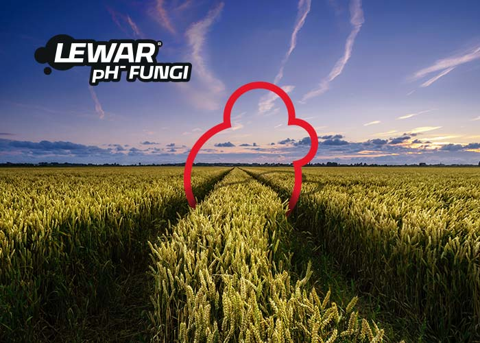 Lewar pH- Fungi - baner 700x500