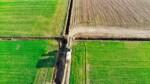 nawożenie pszenicy - pole pszenicy