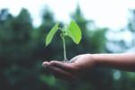 środki ochrony roślin jakie są roślina na dłoni